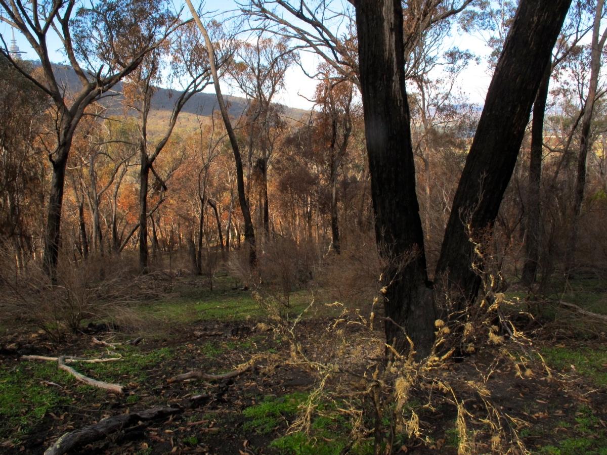 Aranda forest